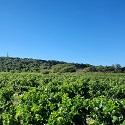 Chateau Monge Languedoc