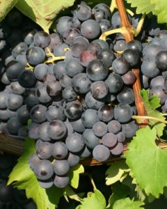 Grapes and Styles Tasting Events