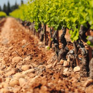 Lirac Soil