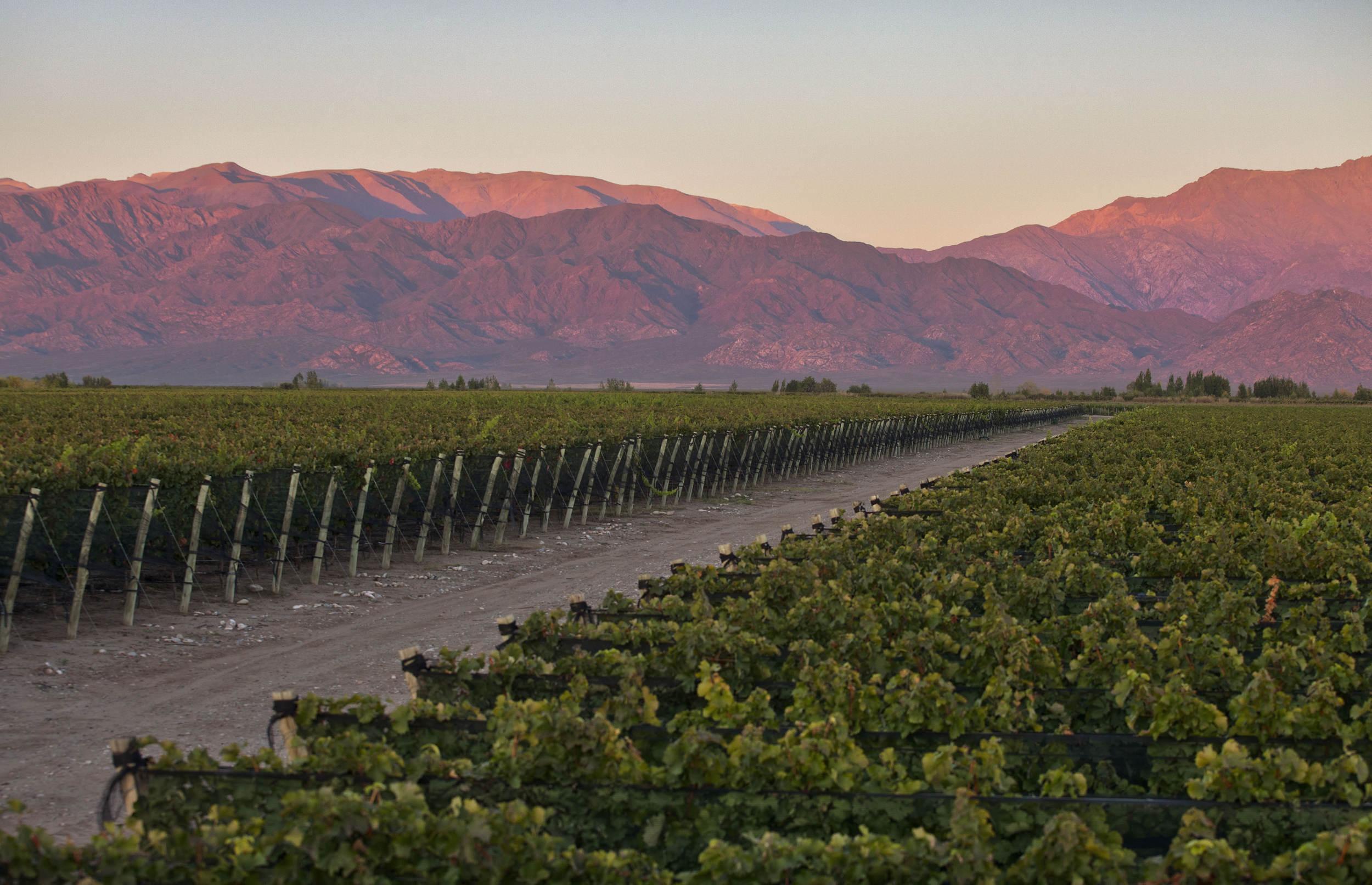 Argentinian Wine Tasting Online
