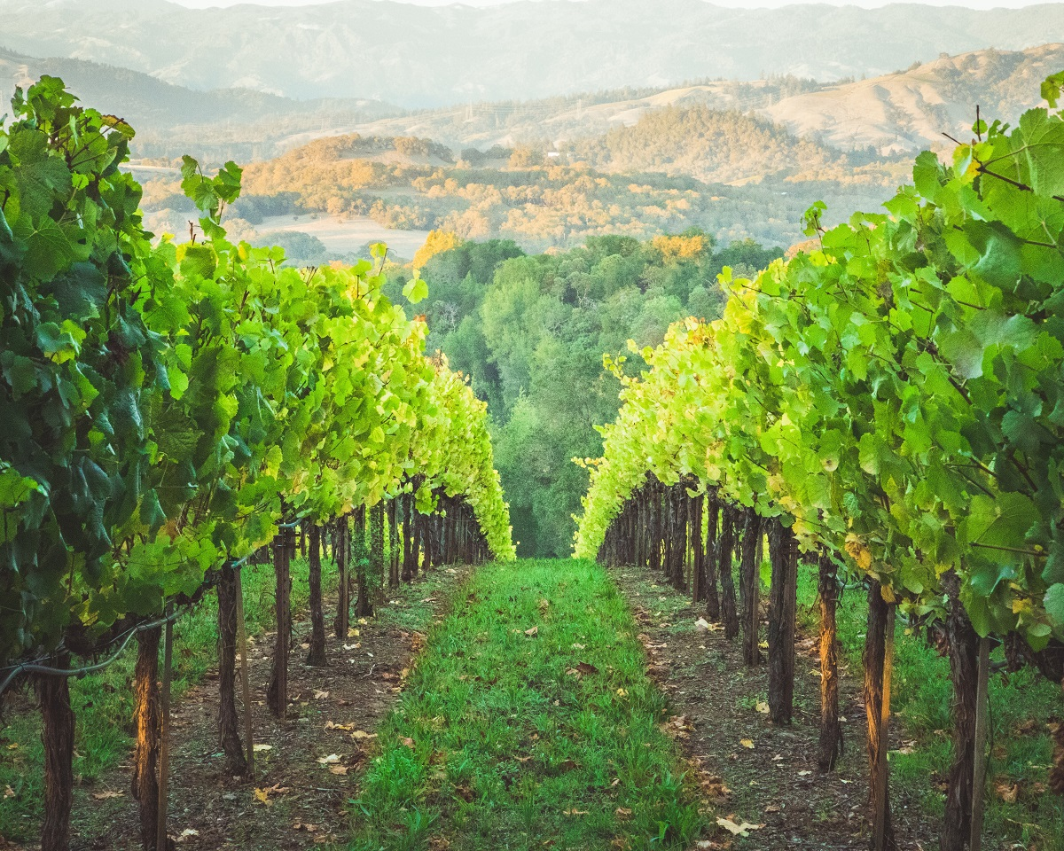Riesling and pinot wine tasting